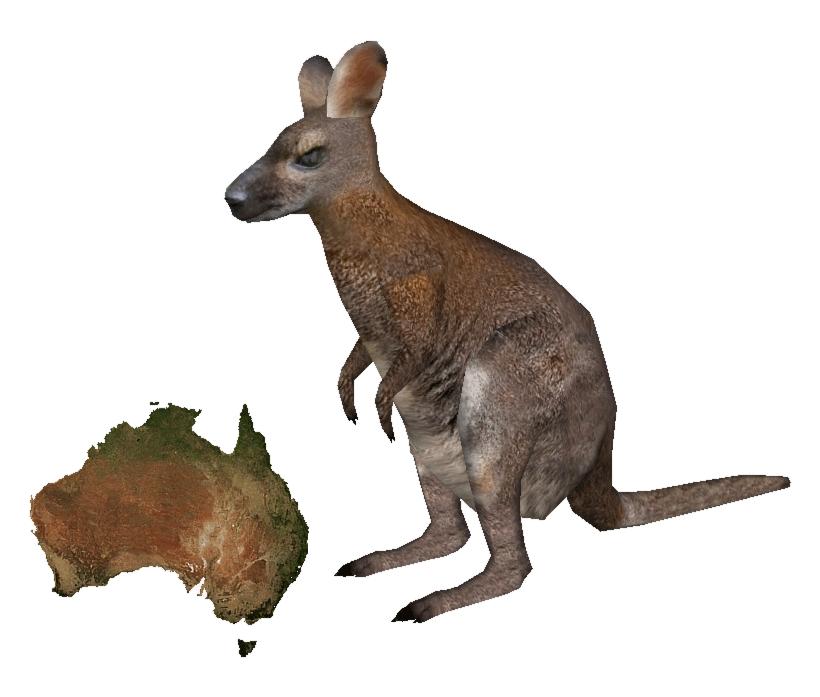 Kangaroo Wallaby PNG File