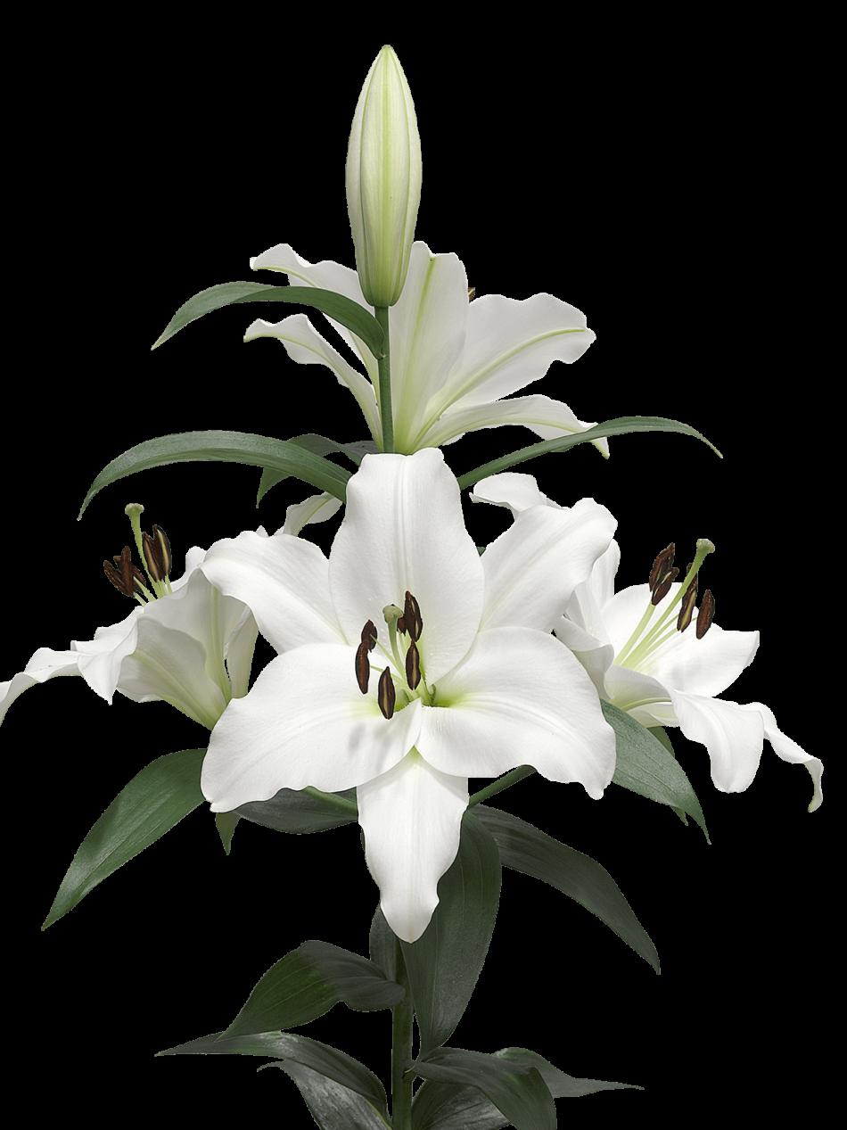 A Few Lilies