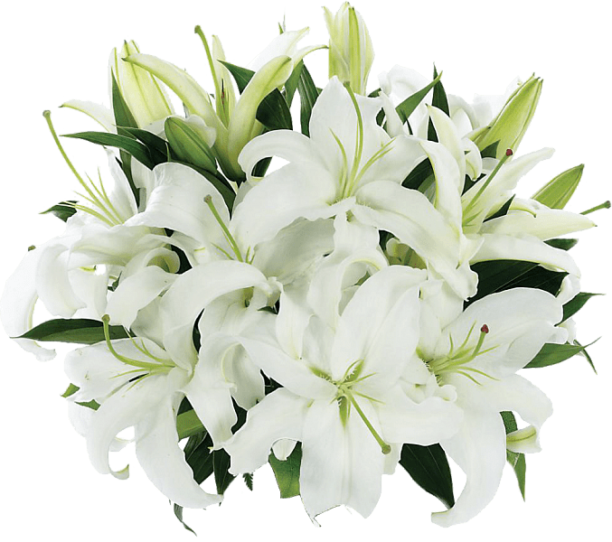 Tight Bouquet Of Lilies