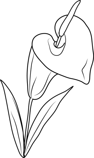 White Lily Clipart