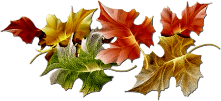Series Of Maple Leaves