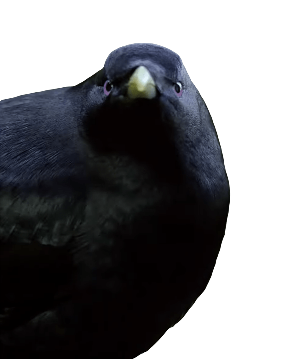 Lemme Smash Bird